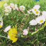Couronne de fleurs marguerites et pissenlits