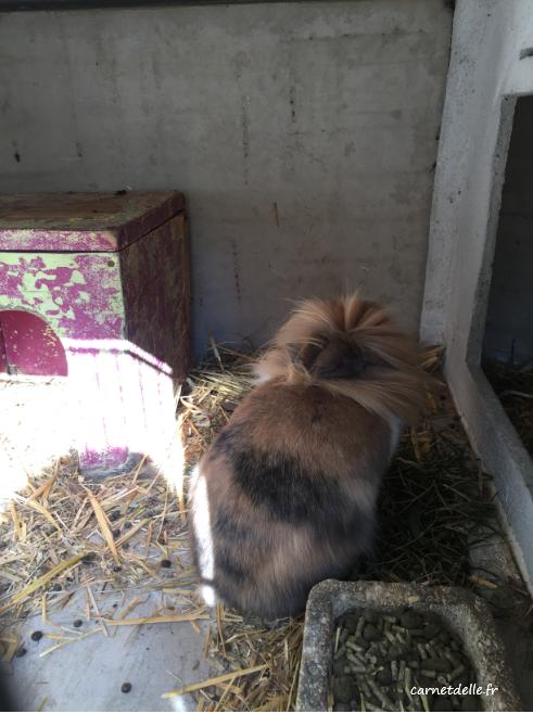 Elevage de lapin du domaine de Rochasson