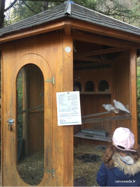 Les oiseaux du domaine de Rochasson