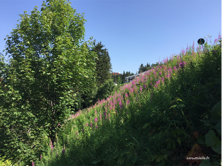 Fleurs sauvages, Chamrousse