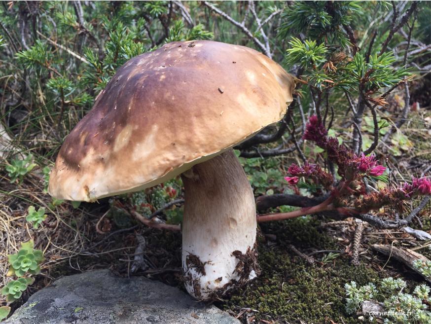 Champignon trouvé sur le chemin, Lac Achard