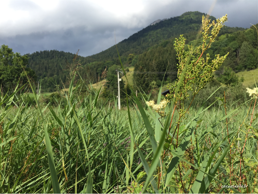 Marais des sagnes